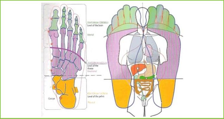 foot-chart